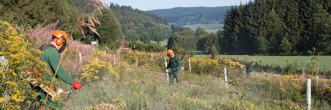Kulturpflege und Ausmäharbeiten - Freischneiden Ihrer Forstkulturen und Anzuchten