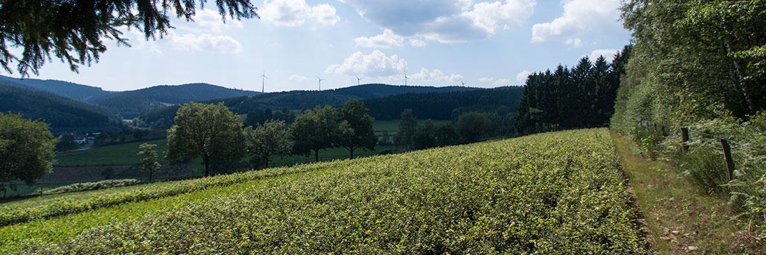 Herkunftsgebiete der Forstpflanzen - Baumschule Balzer-Sellmann