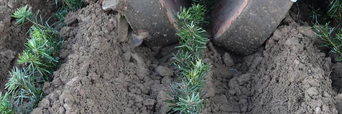 Planzenbedarfsrechner - Forstpflanzen aus Kirchhundem